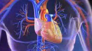 Hacamat ve Kalp Damar Hastalıkları