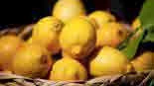Böbrek Taşının Limon Kürü ile Tedavisi