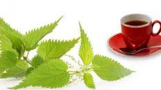 Bitkilerden,merhem,şurup ve çay nasıl hazırlanır?