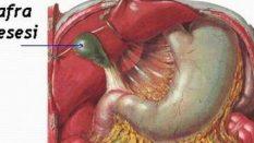 Organlarımızı Nasıl Yıpratırız ?